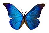 mariposa9small